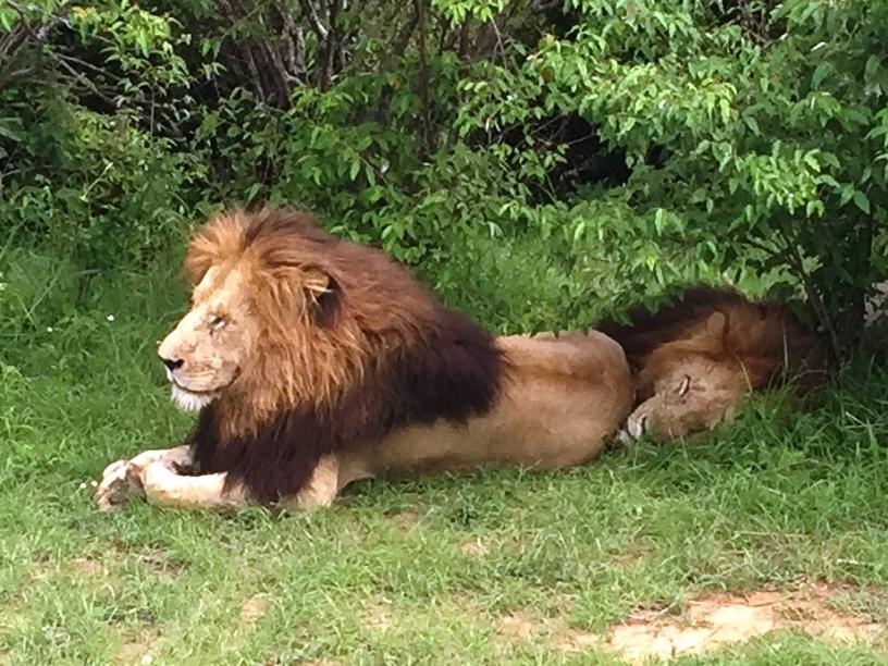 La vanidad es un león al que hay que vigilar de cerca, incluso cuando está durmiente.