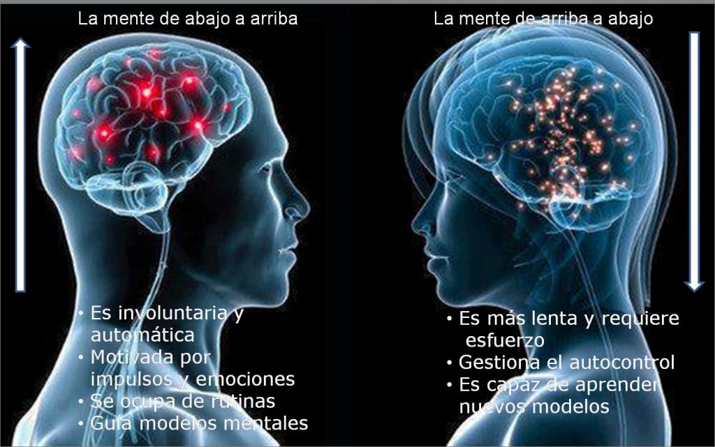 Los circuitos neuronales