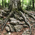 Recuperemos la unidad con la Naturaleza